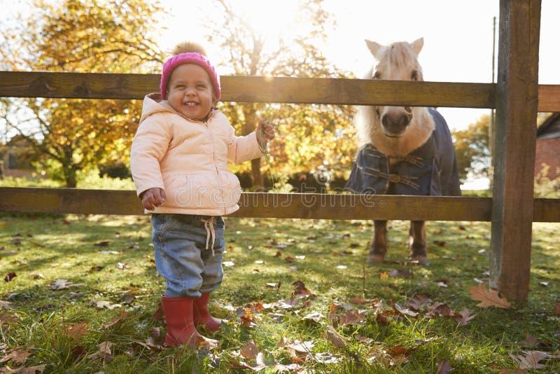 Moça em Autumn Walk Looking At Pony no campo foto de stock