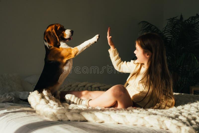 A moça encantador que encontra-se no sofá, olhando o cão do lebreiro e dá a elevação cinco Criança bonito de sorriso que descansa fotografia de stock