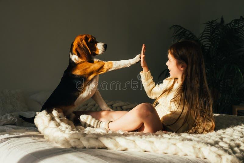 A moça encantador que encontra-se no sofá, olhando o cão do lebreiro e dá a elevação cinco Criança bonito de sorriso que descansa fotos de stock