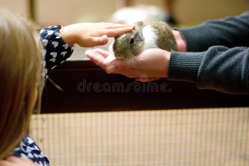 Moça feliz com coelho do bebê das trocas de carícias do pai imagem de stock royalty free