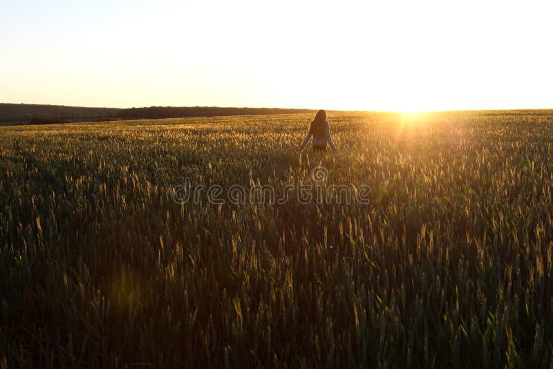 Moça feliz com o cabelo bonito longo que está em um campo de trigo na luz solar brilhante fotografia de stock royalty free