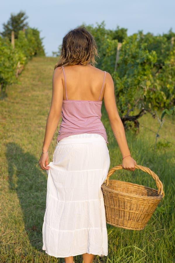 Moça na colheita da uva com a cesta de vime grande para armazenar g fotografia de stock royalty free
