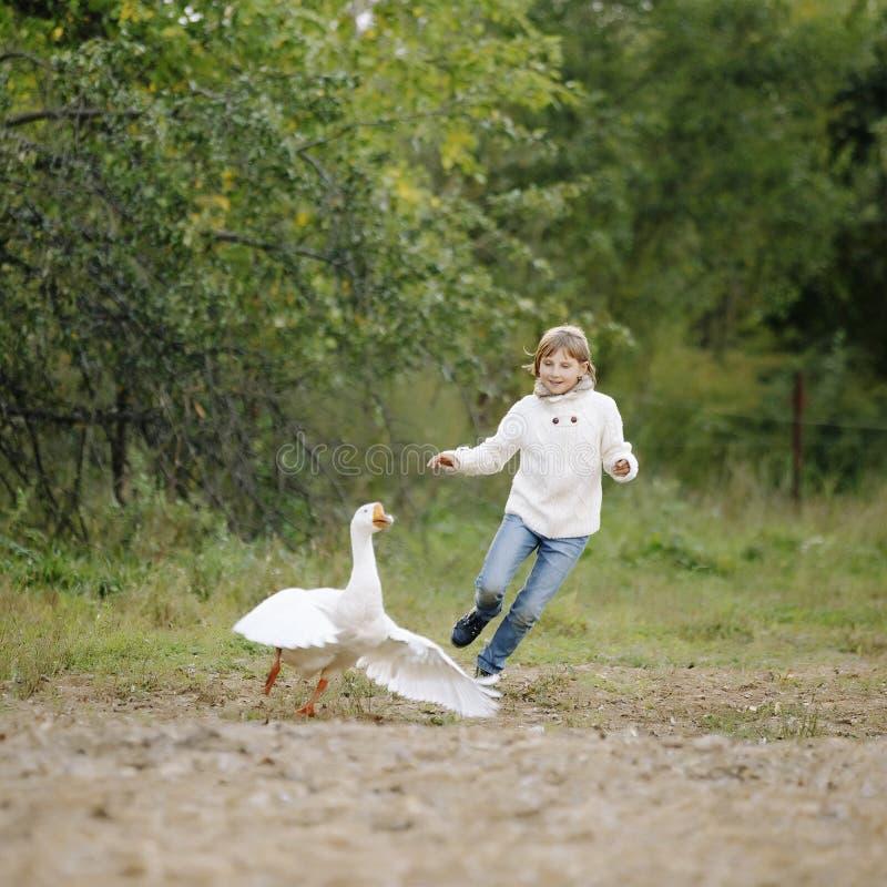 Moça pequena em uma camiseta branca e nas calças de brim que correm após o ganso na exploração agrícola Retrato do estilo de vida foto de stock royalty free