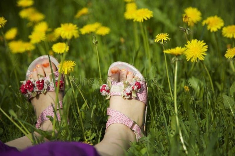 Moça que encontra-se na grama no meio dos dentes-de-leão na luz solar com os pregos pintados do dedo do pé fotos de stock