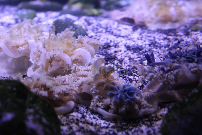 Możesz Widzieć Ja Ty? Tajni Jellyfish obrazy stock