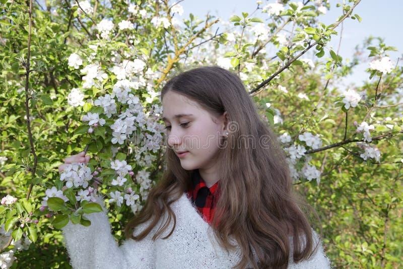 Mo?a com cabelo longo em uma camiseta branca em um jardim de floresc?ncia da ma?? na mola foto de stock