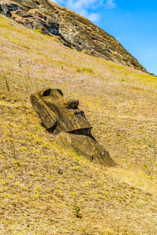 Moai at the hill of Rano Raraku. In Easter Island, Chile royalty free stock photography
