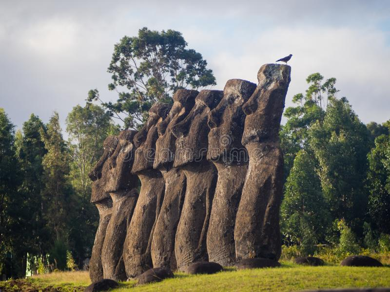 The moais of Ahu Akivi in Easter Island. royalty free stock photography