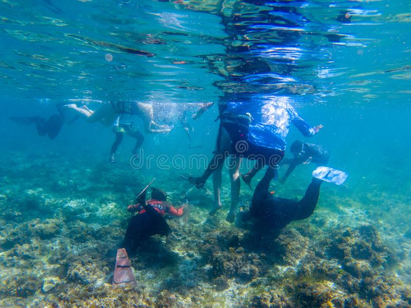 Moalboal, Philippines - 14 May 2019: Snorkeling tourist and sea turtle, underwater photo. Tourist attraction animal stock photo