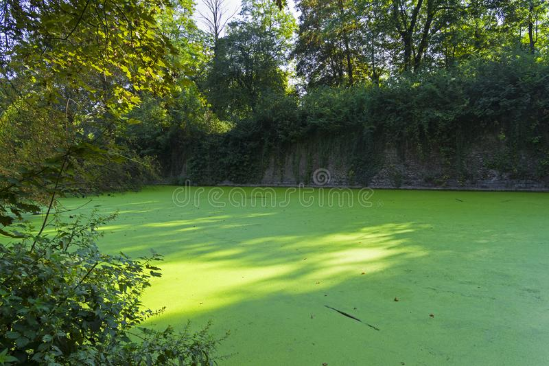 Moat overgrown with duckweed at the wall of the old fortress. Moat with water overgrown with a duckweed pond at the walls of Citadel of Lille. Sunny day at the royalty free stock photos