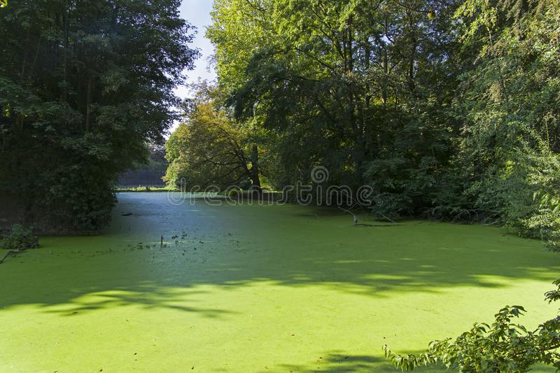 Moat overgrown with duckweed at the wall of the old fortress. Moat with water overgrown with a duckweed pond at the walls of Citadel of Lille. Sunny day at the royalty free stock image