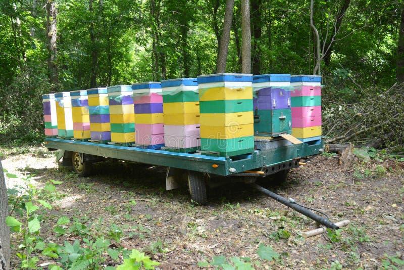 Mobiele Bijenkorfaanhangwagen Het opnieuw vestigen van Honey Bees in Bos royalty-vrije stock afbeelding