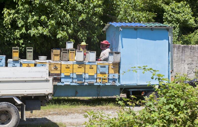 Mobiele bijenstalbeekeepers dichtbij het dorp Zubova Shchel in Lazarevskoe-district, Krasnodar-gebied stock foto