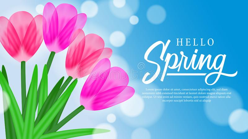 Hello Spring background with beauty tulips flower blossom. Hello Spring background with beauty flower blossom. Suitable for background, banner flyer vector illustration