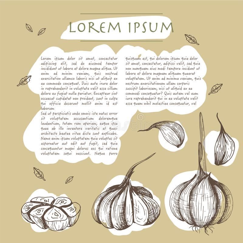 Food background with garlic vegetable Hand drawn white social media template with text. Food background with garlic vegetables Hand drawn white social media vector illustration