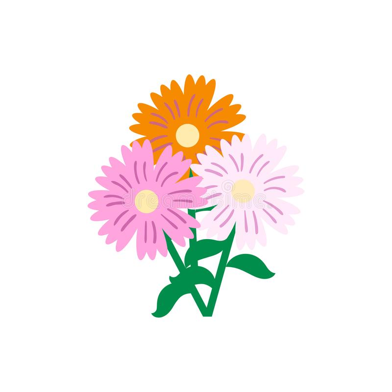 Daisy flower pink and orange colour. Daisy flora flower nature and beaty with pink and orange colour royalty free illustration