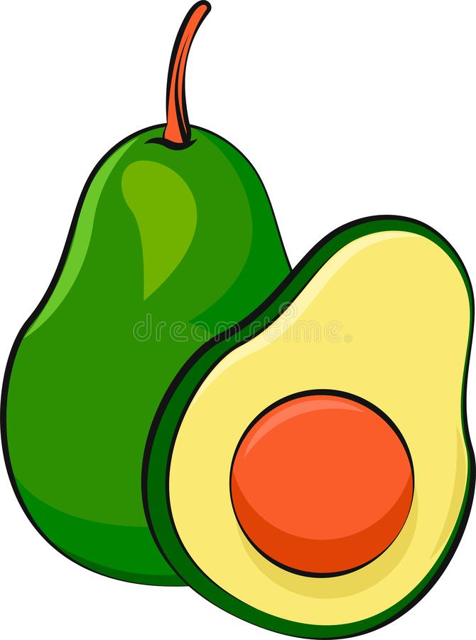 Isolated avocado vector illustration. Vegetarian food.  Bright, vivid and colorful fruit. stock image