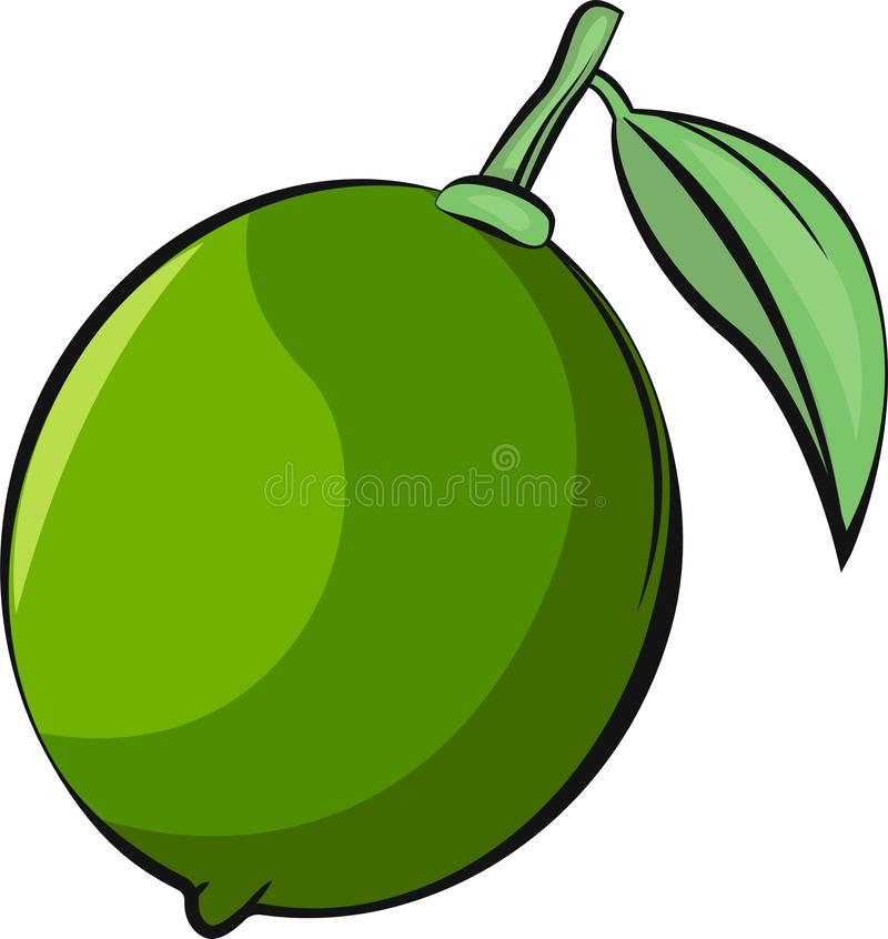 Isolated lime vector illustration. Vegetarian. Bright, vivid and colorful fruit. royalty free stock photo