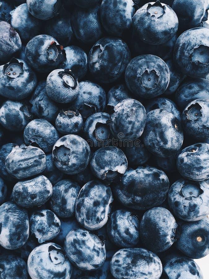 Mobilt foto av blåbärbakgrund royaltyfria foton