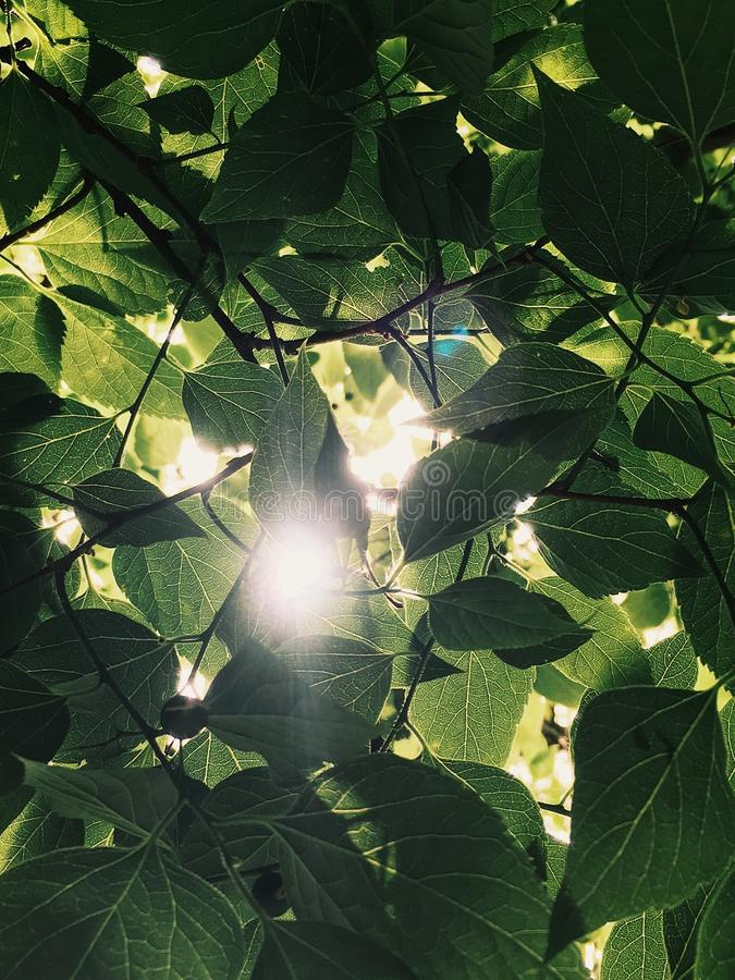 Mobilt foto av solen som skiner till och med sidorna arkivfoto
