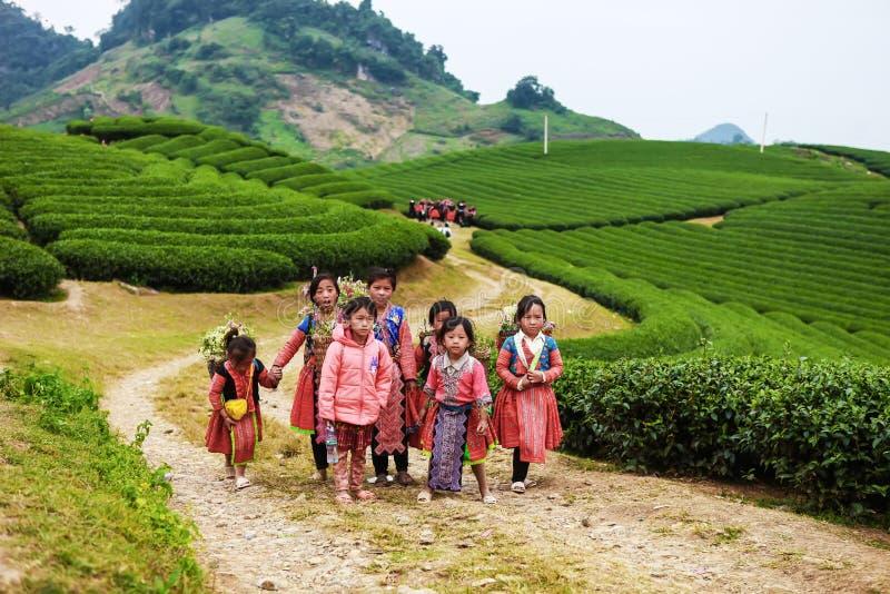 Moc Chau, Вьетнам - 4-ое ноября 2017: Пейзаж весны горы с blossoming сливой, маленькими девочками Hmong нося flowe капусты стоковое изображение