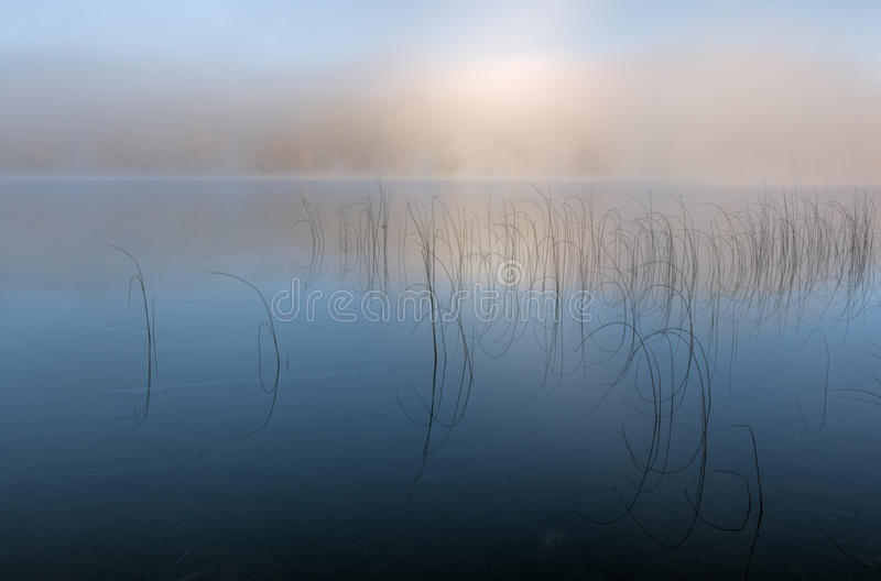 Download Moccasin Lake in Fog stock photo. Image of reeds, foliage - 16908336