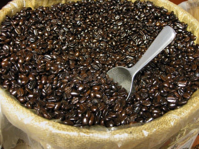 Mocha java coffee beans stock image