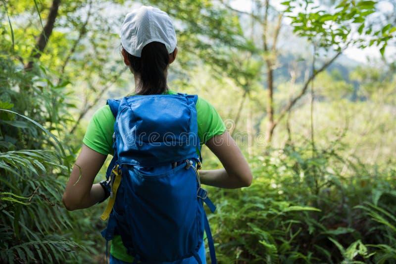 Mochileiro que caminha na floresta úmida foto de stock