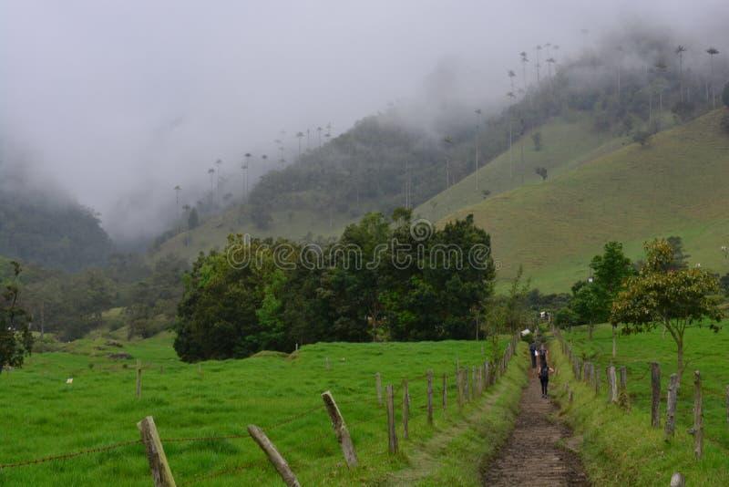Mochileiros que caminham o vale de Cocora, perto à cidade colonial de Salento, em Colômbia fotografia de stock royalty free
