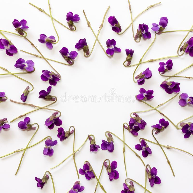 Mock up background with violet flowers on white background royalty free illustration