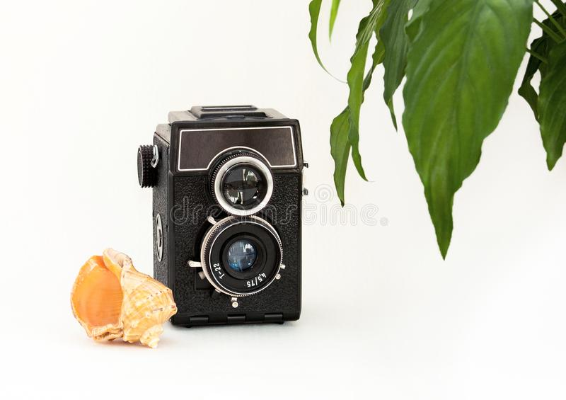 Mock up blank wall, old camera, plant and sea shell. Interior home white poster mockup with space for text and green leaves. royalty free stock images