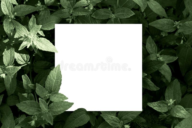 Mock up paper white card on a green leaves. Creative layout with nature concept. Leaf, background, logo, sign, board, frame, template, top, space, minimal royalty free stock photos