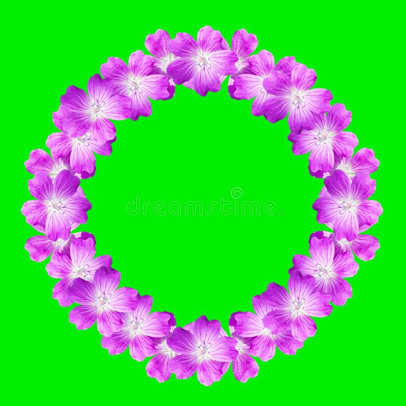Mock up round floral frame from flowers of wild geranium isolated on green background stock illustration