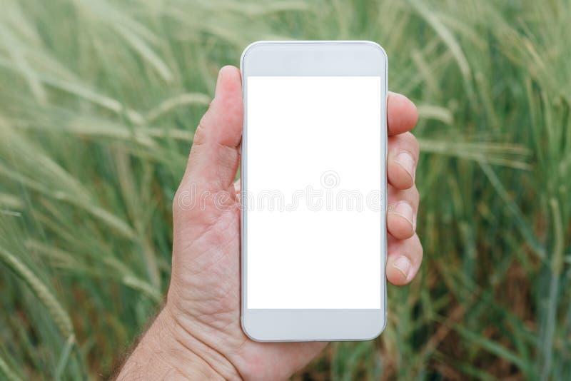 Mock up smartphone screen in barley field stock image