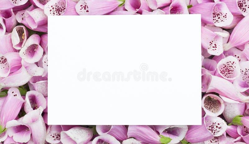 Mockup per una carta con una pila di boccioli di fiori rosa di digitalis fotografia stock libera da diritti