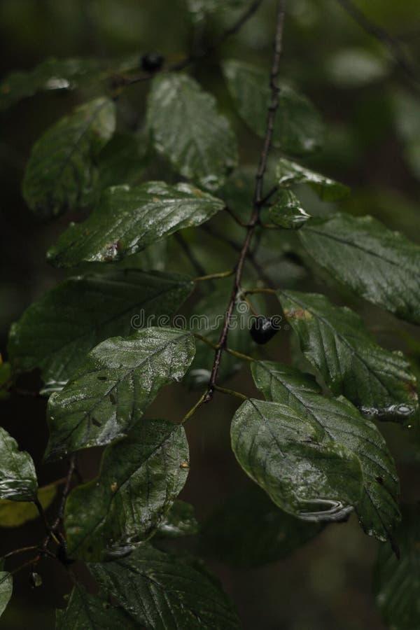 Moczy liście po deszczu w lesie obraz stock