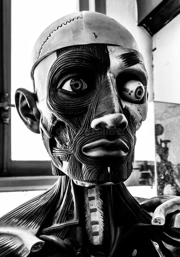 Modèle anatomique humain, tête de mannequin d'anatomie, portrait noir et blanc de monstre photo stock