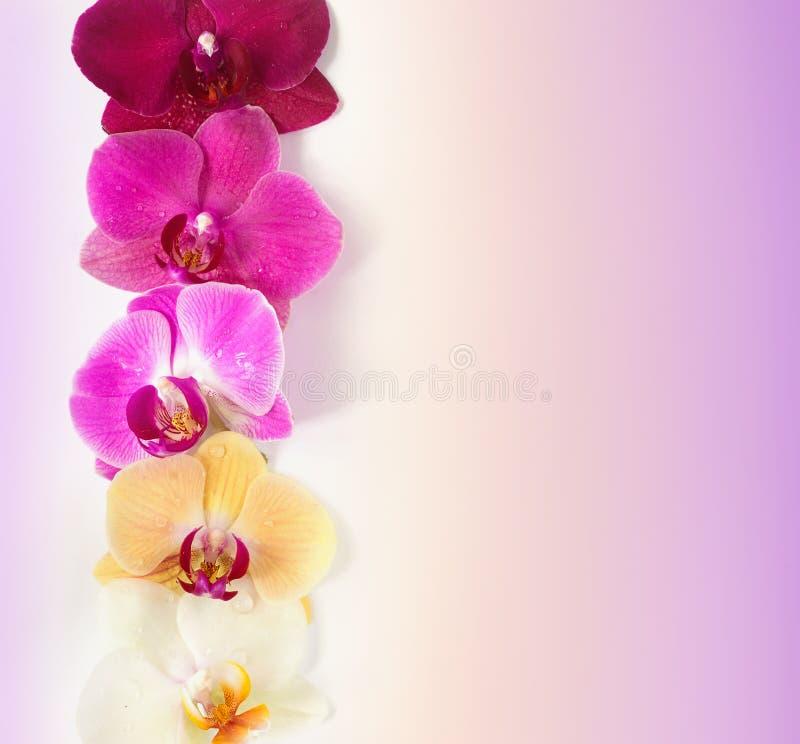 Modèle avec des fleurs d'orchidées photo stock