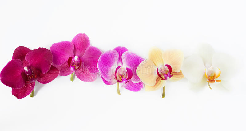 Modèle avec des fleurs d'orchidées sur le blanc images libres de droits