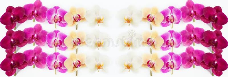 Modèle avec des fleurs d'orchidées sur le blanc images stock