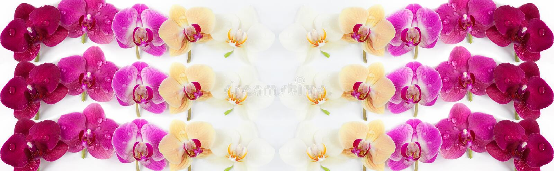 Modèle avec des fleurs d'orchidées sur le fond blanc photographie stock libre de droits