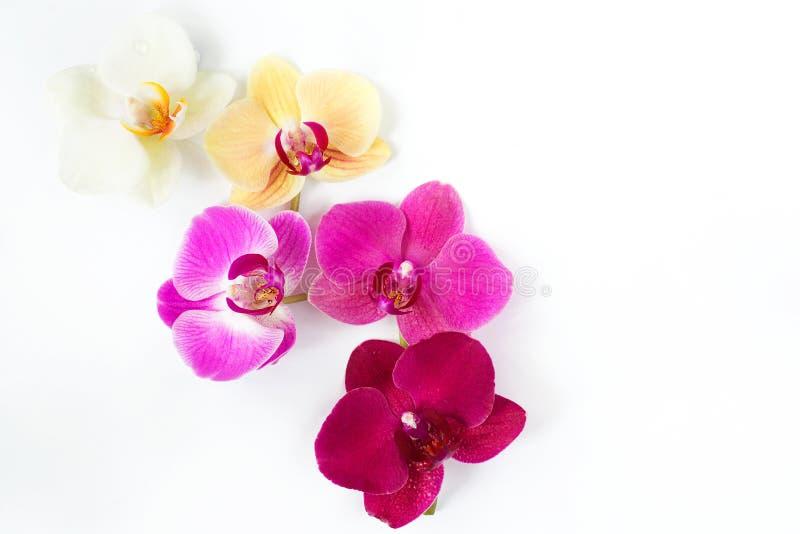 Modèle avec des fleurs d'orchidées sur le fond blanc photo libre de droits