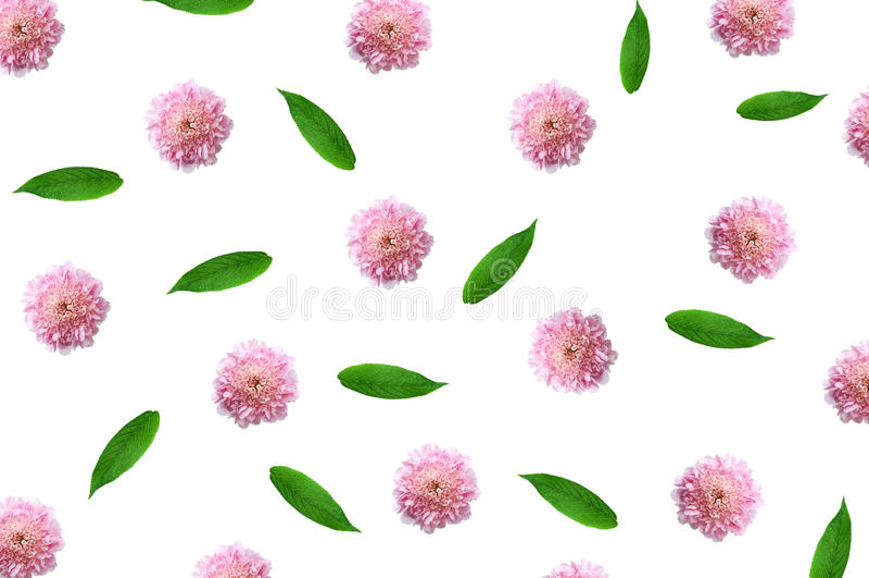 Modèle avec les bourgeon floraux, les branches et les feuilles roses d'isolement images libres de droits