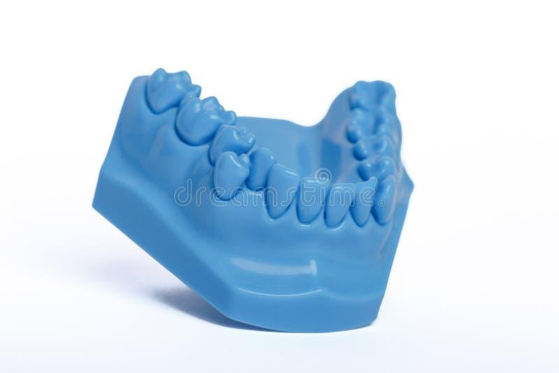 Modèle bleu orthodontique de mâchoire inférieure utilisé en art dentaire pour la démonstration image libre de droits