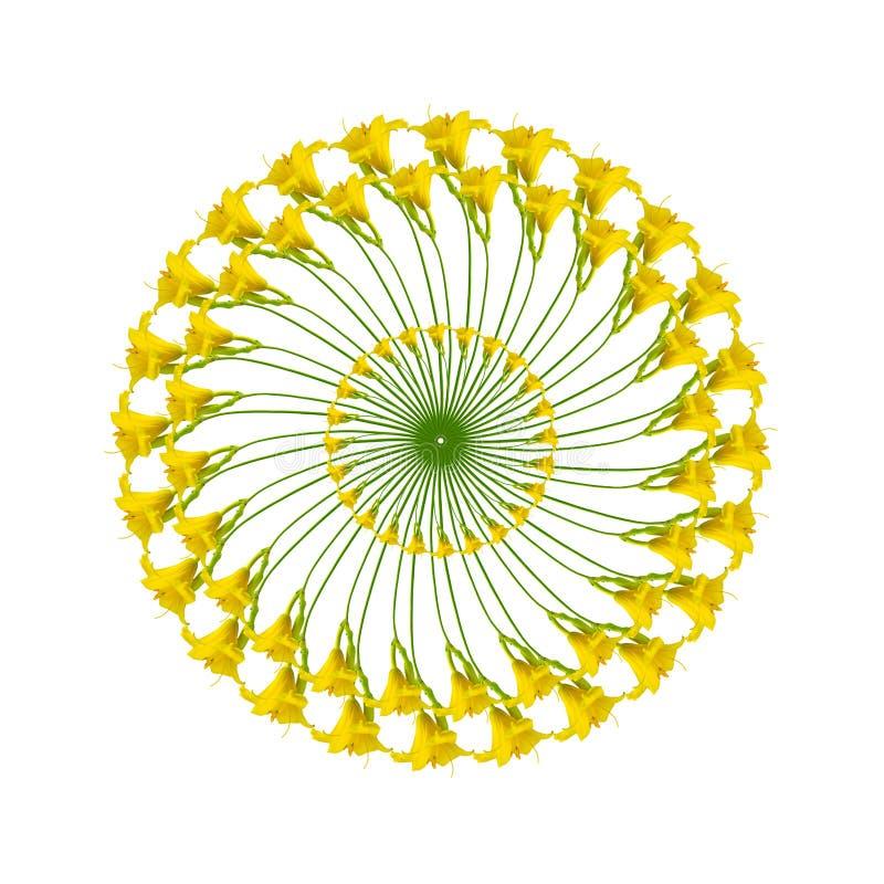Modèle circulaire avec des anneaux des daylilies jaunes photographie stock libre de droits