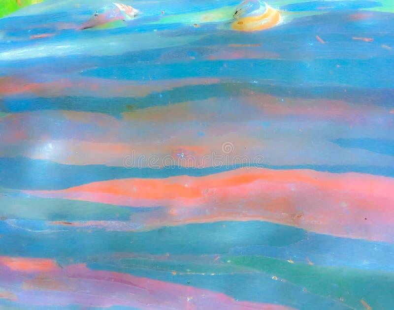 Modèle coloré d'abrégé sur arc-en-ciel d'écorce d'arbre d'eucalyptus photos libres de droits