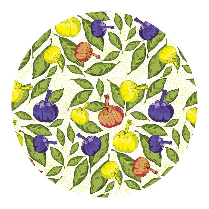 Modèle coloré naturel de haute qualité de gomme-gutte de garcinia illustration stock
