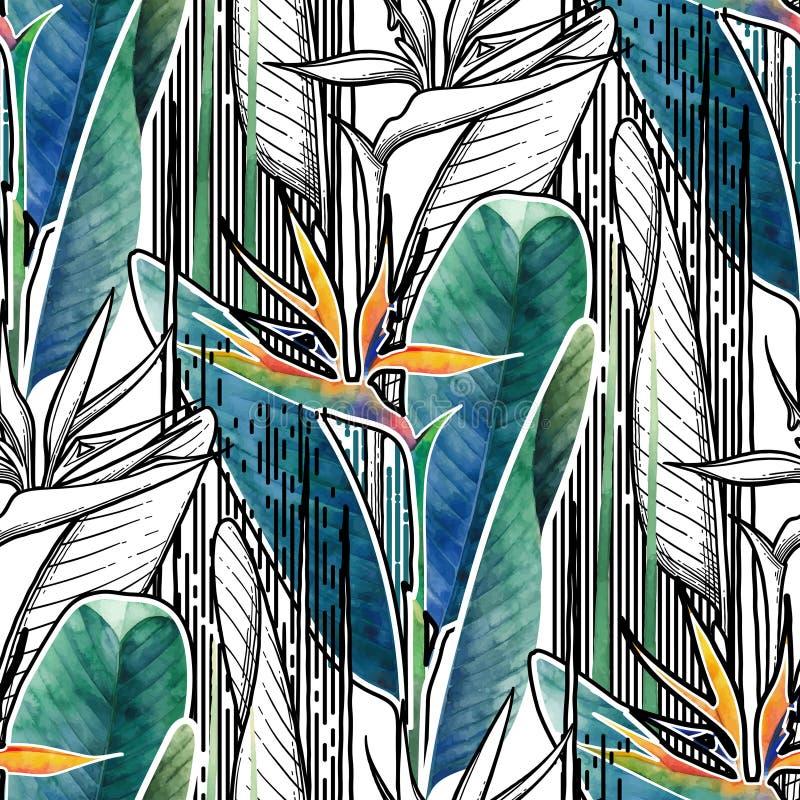 Modèle combiné de strelitzia illustration de vecteur