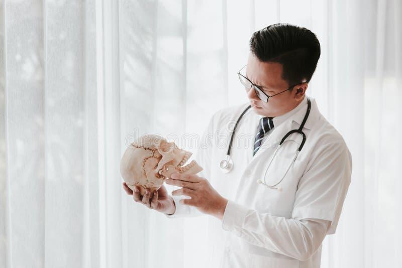 Modèle crâne d'examen du médecin asiatique photos libres de droits