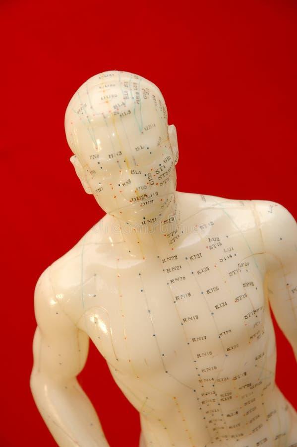 Modèle d'acuponcture photo stock